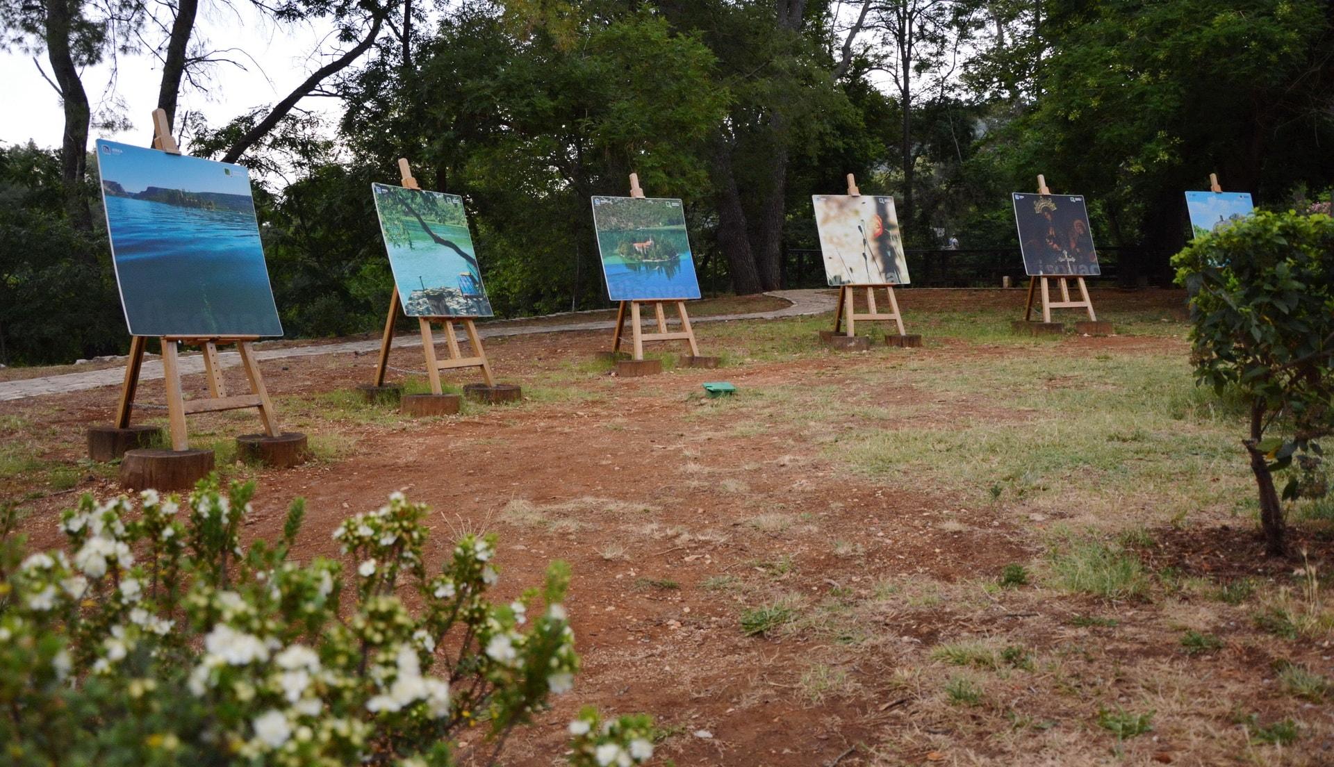 Art showcase